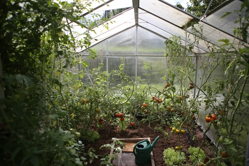 Self-growing clean vegetables