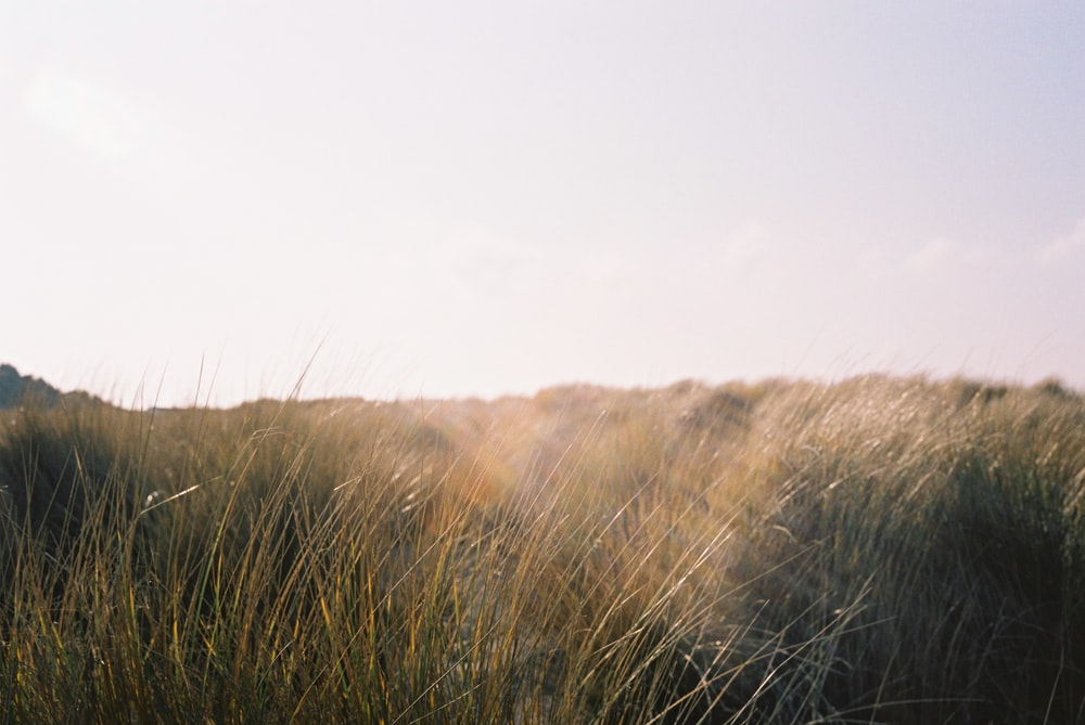 brown grassland under clear sky