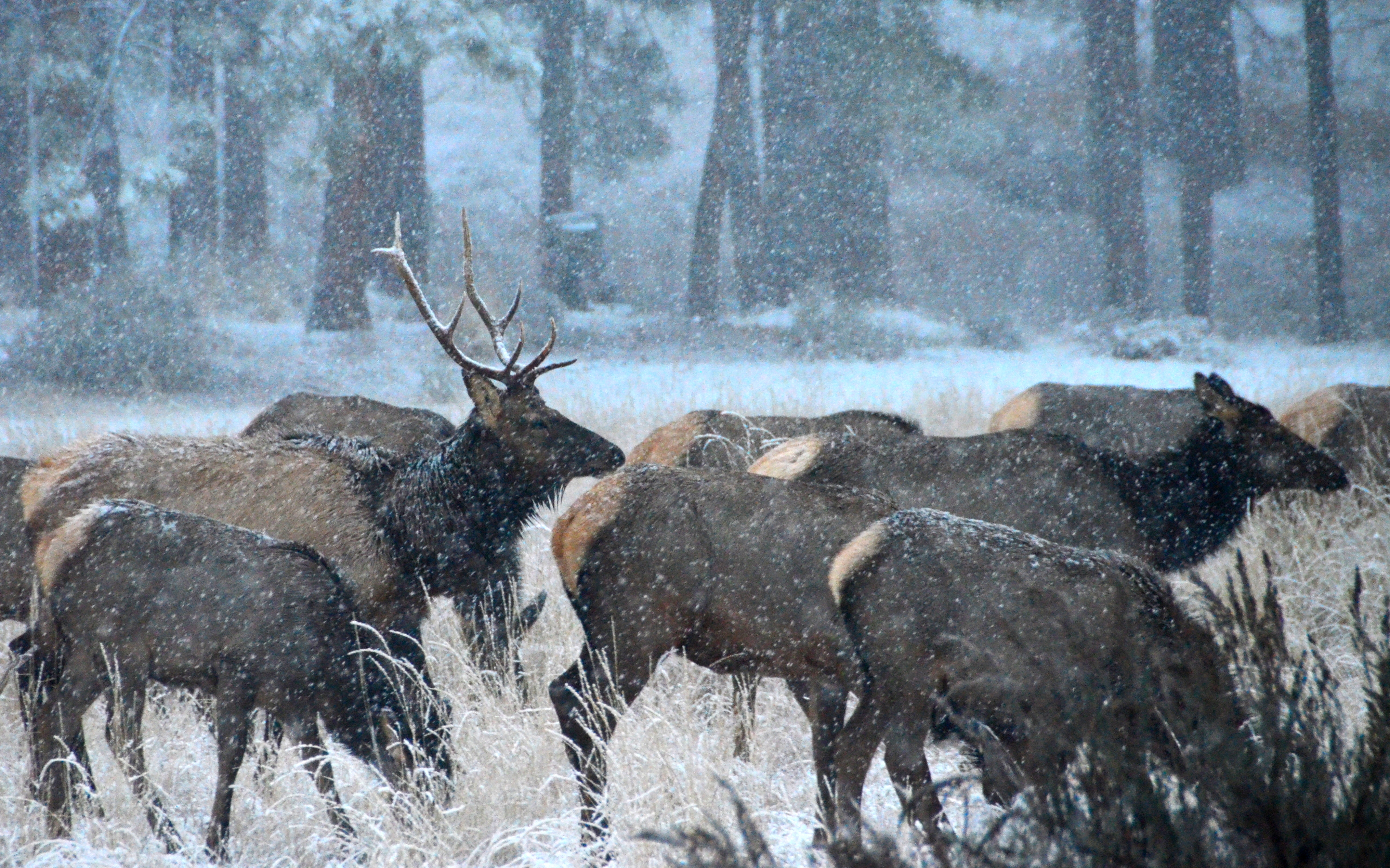 Elk Country Chronicles – The Sounds of Elk Country Volume 9