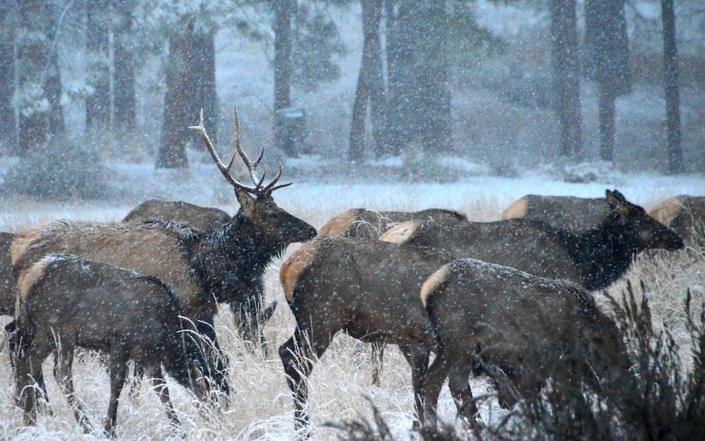 brown reindeer painting