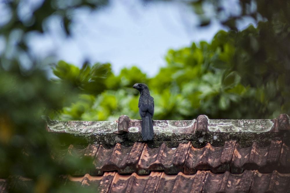 black bird on the roof