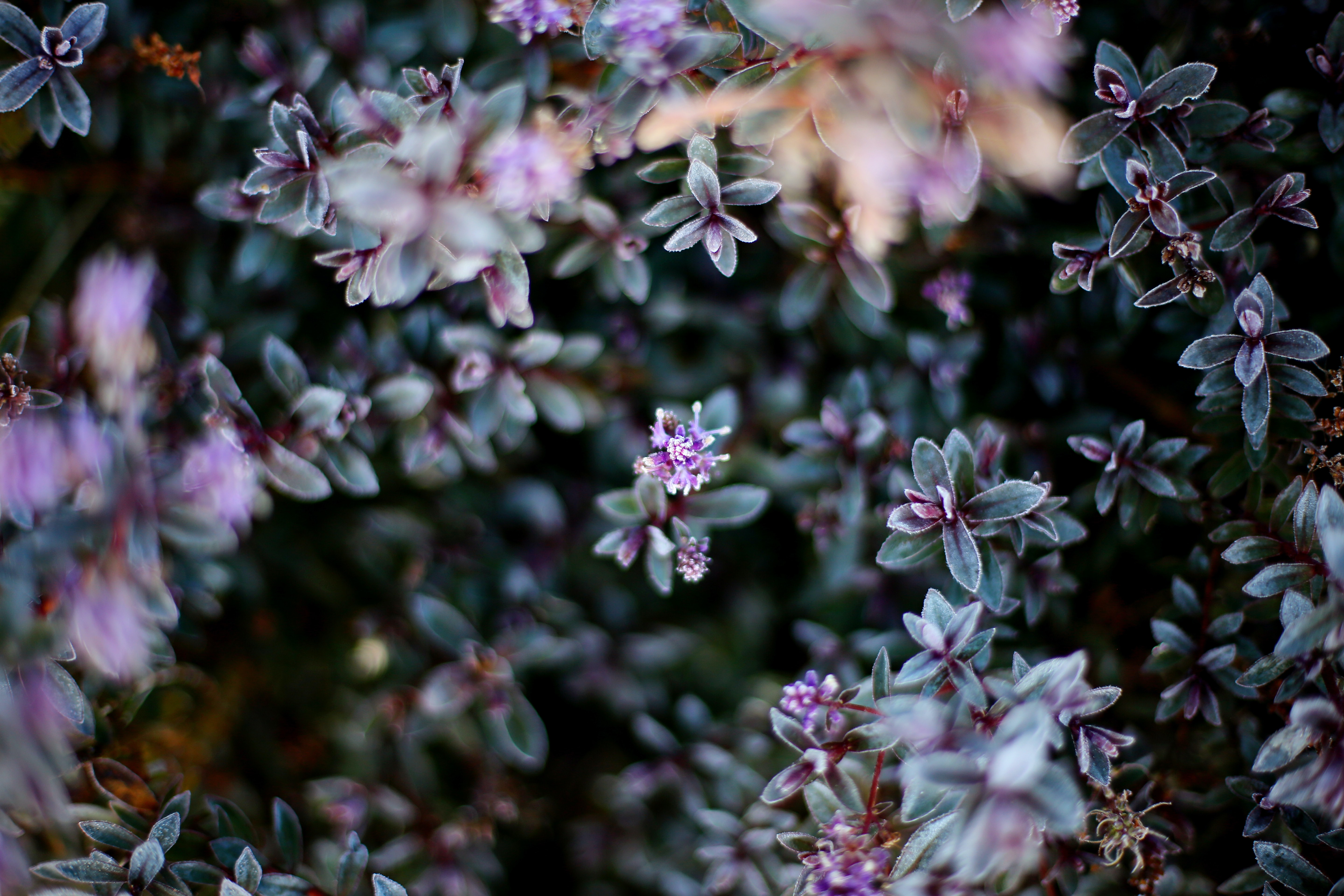 selective focus photography of purple petaled flower in bloom