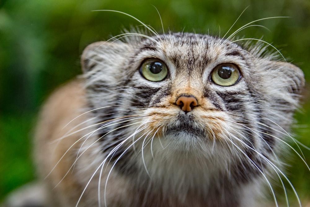 closeup photography of orange, black, and gray tabby cat