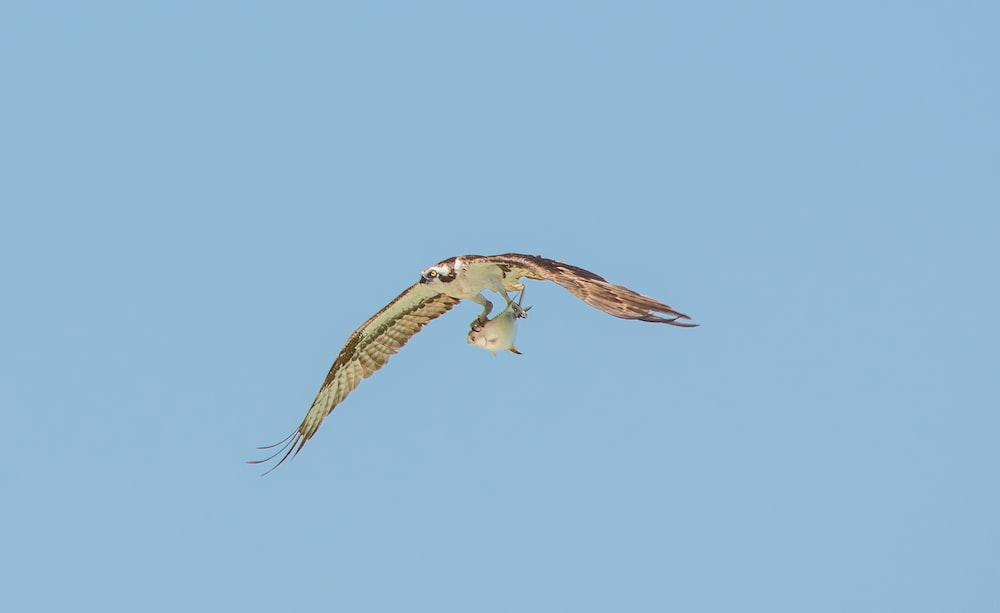 white and brown in flight bird