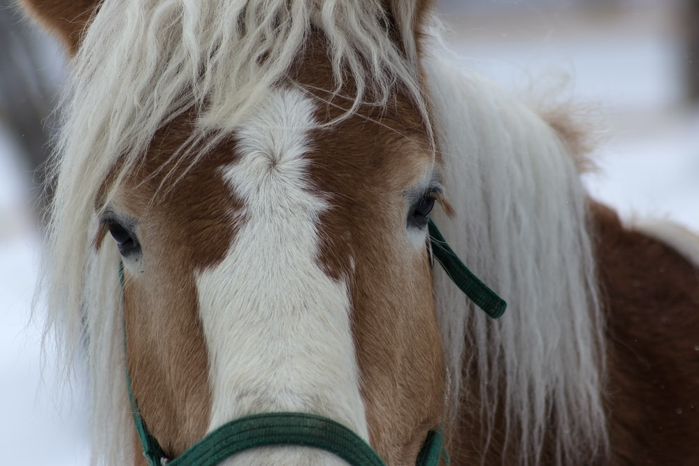 closeup photo of brown horse