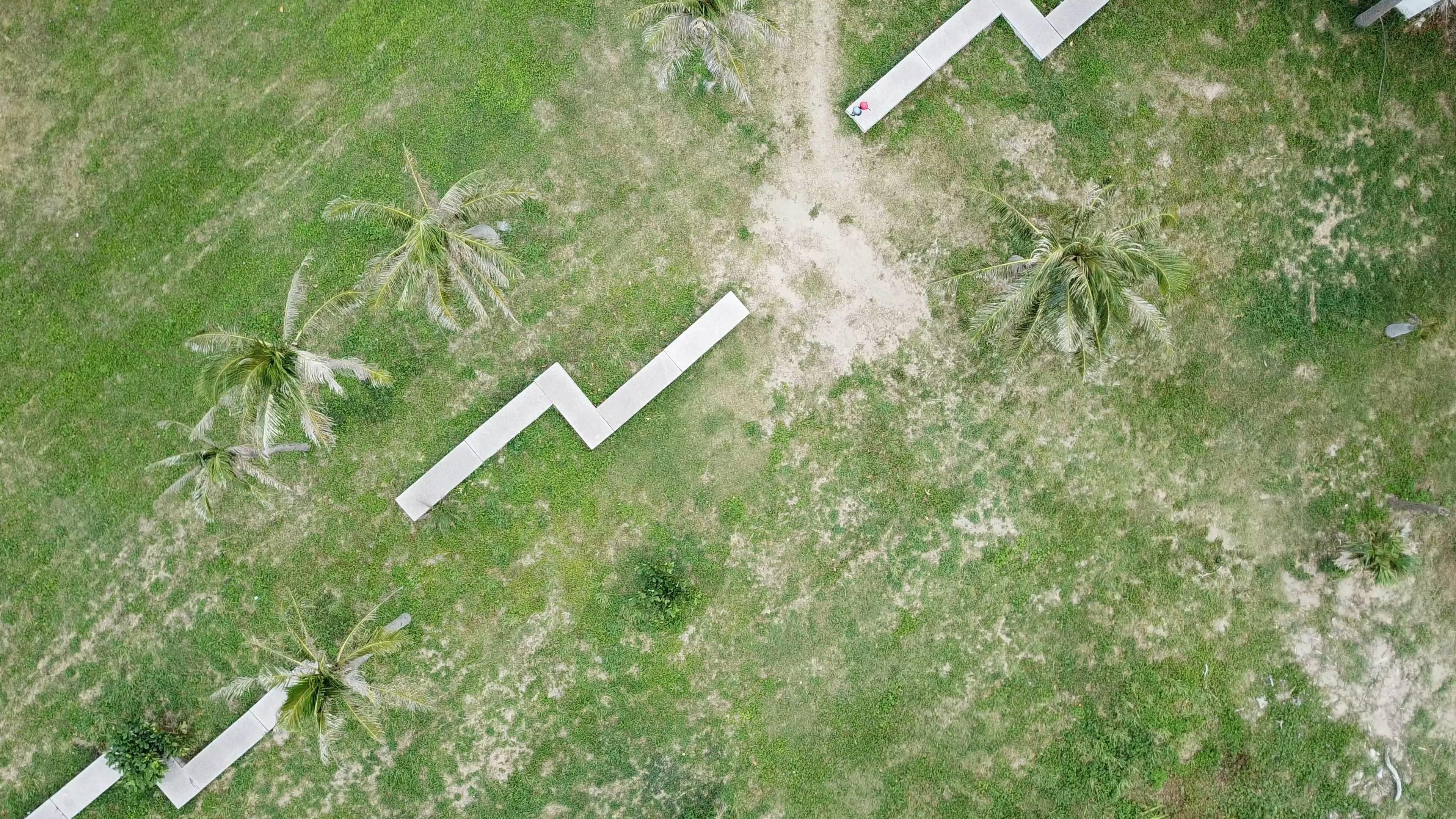 aerial photography of coconut farm