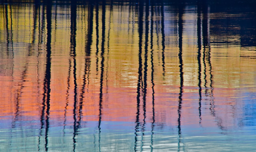 reflections of sticks on body of water