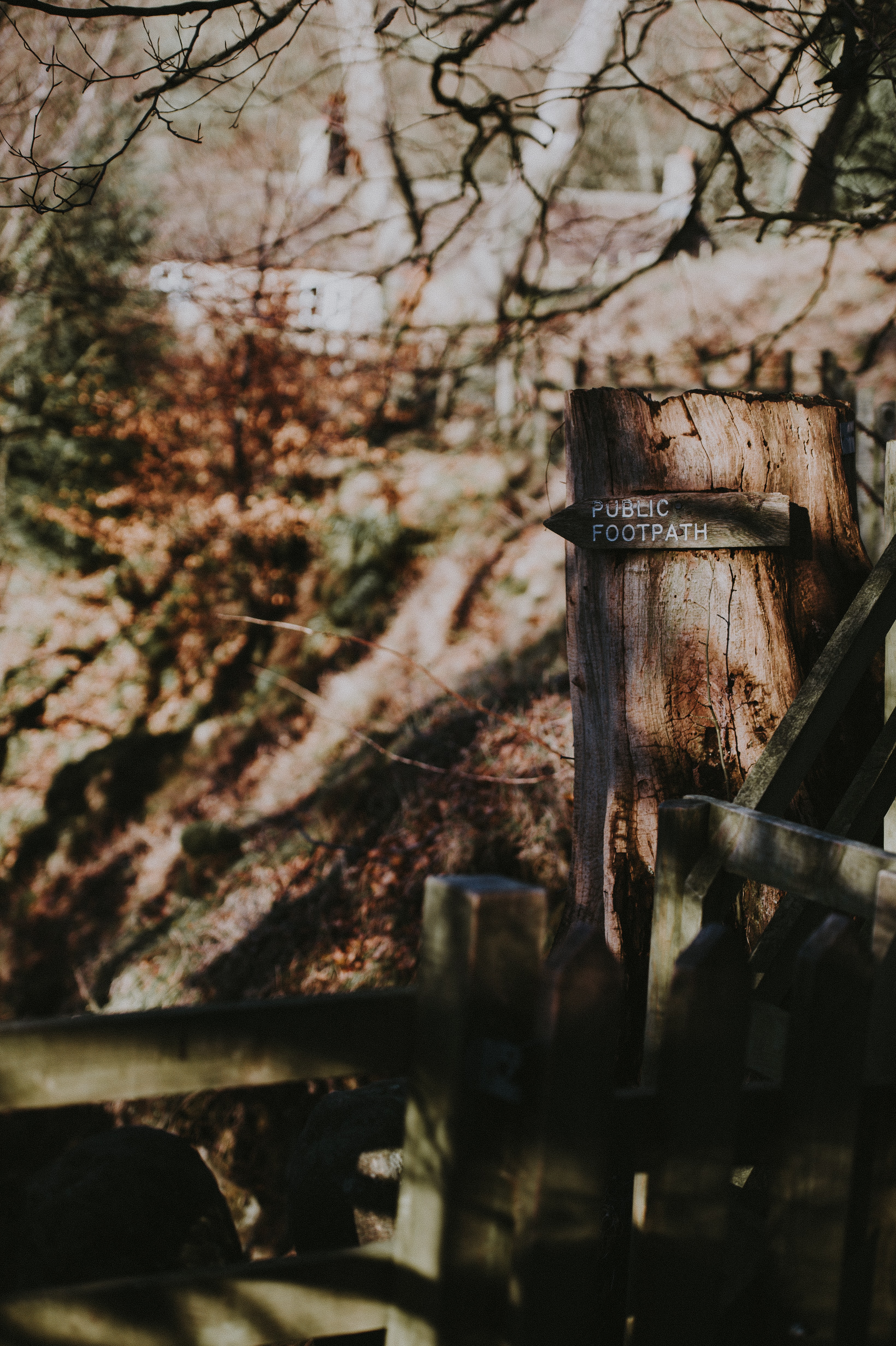 brown wooden fence near tree