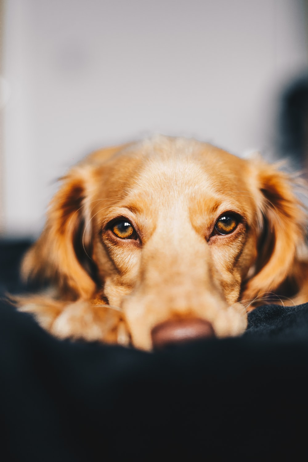 selective focus photography of dog lying on ground