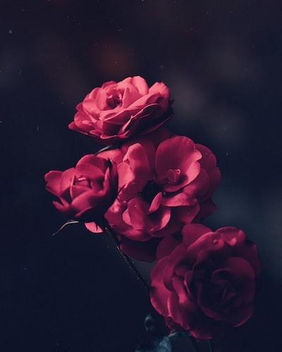 tilt shift lens shot of red flowers