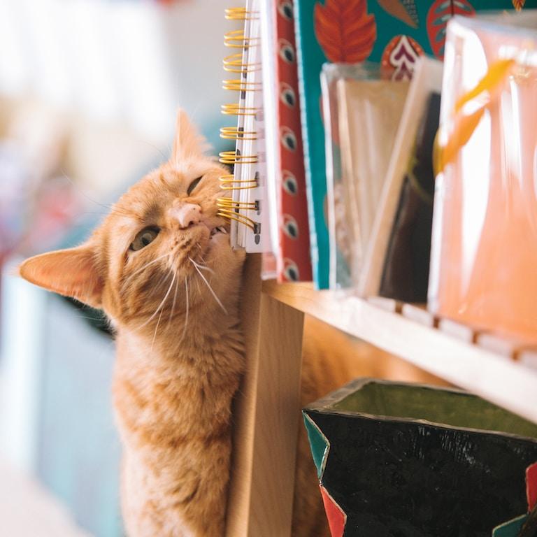 orange tabby cat near books selective focus photography