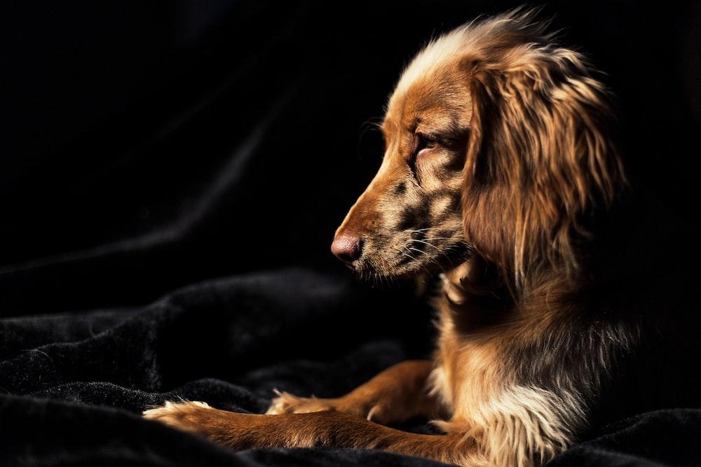 brown dog on black textile