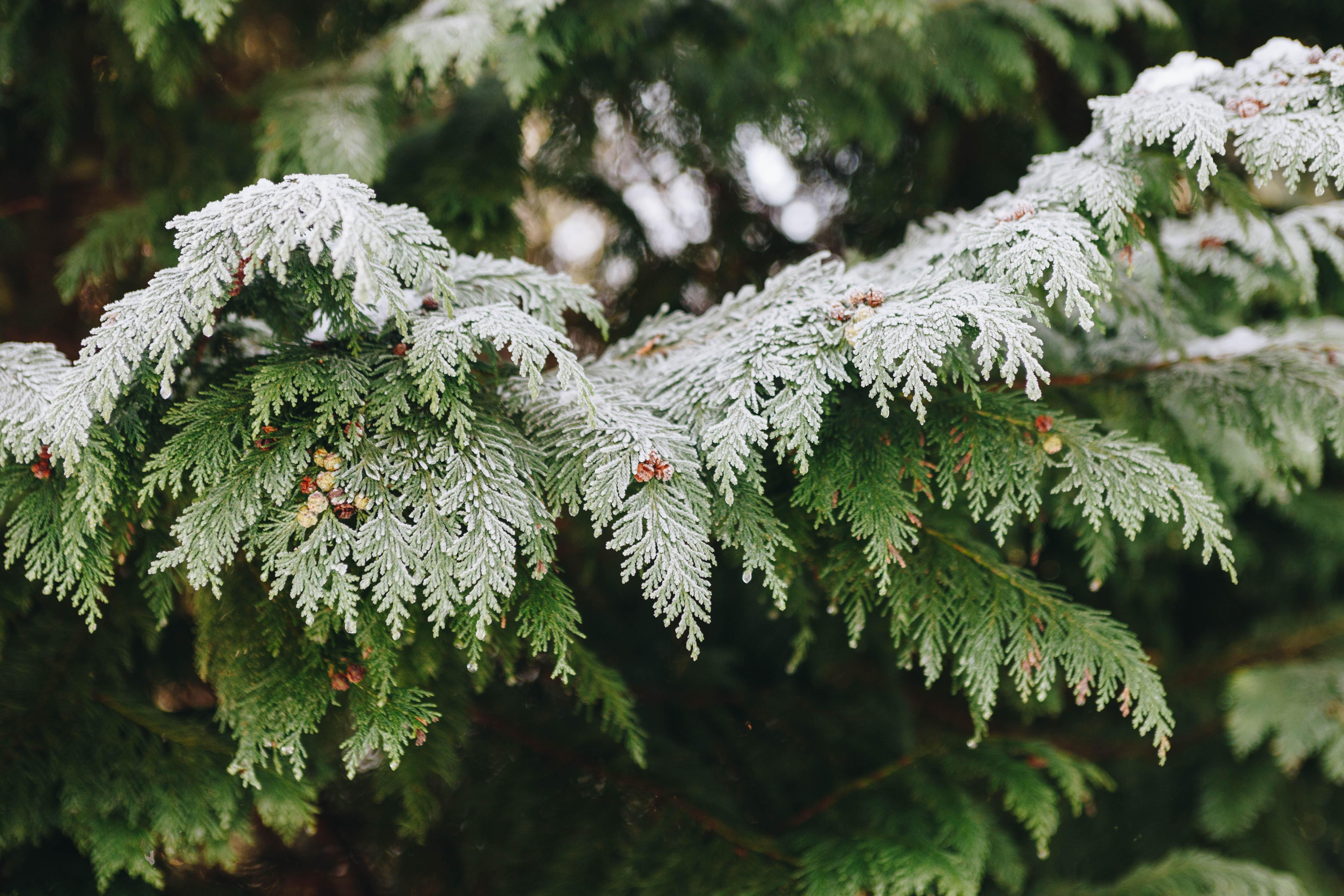 green leaf plant closeup photo