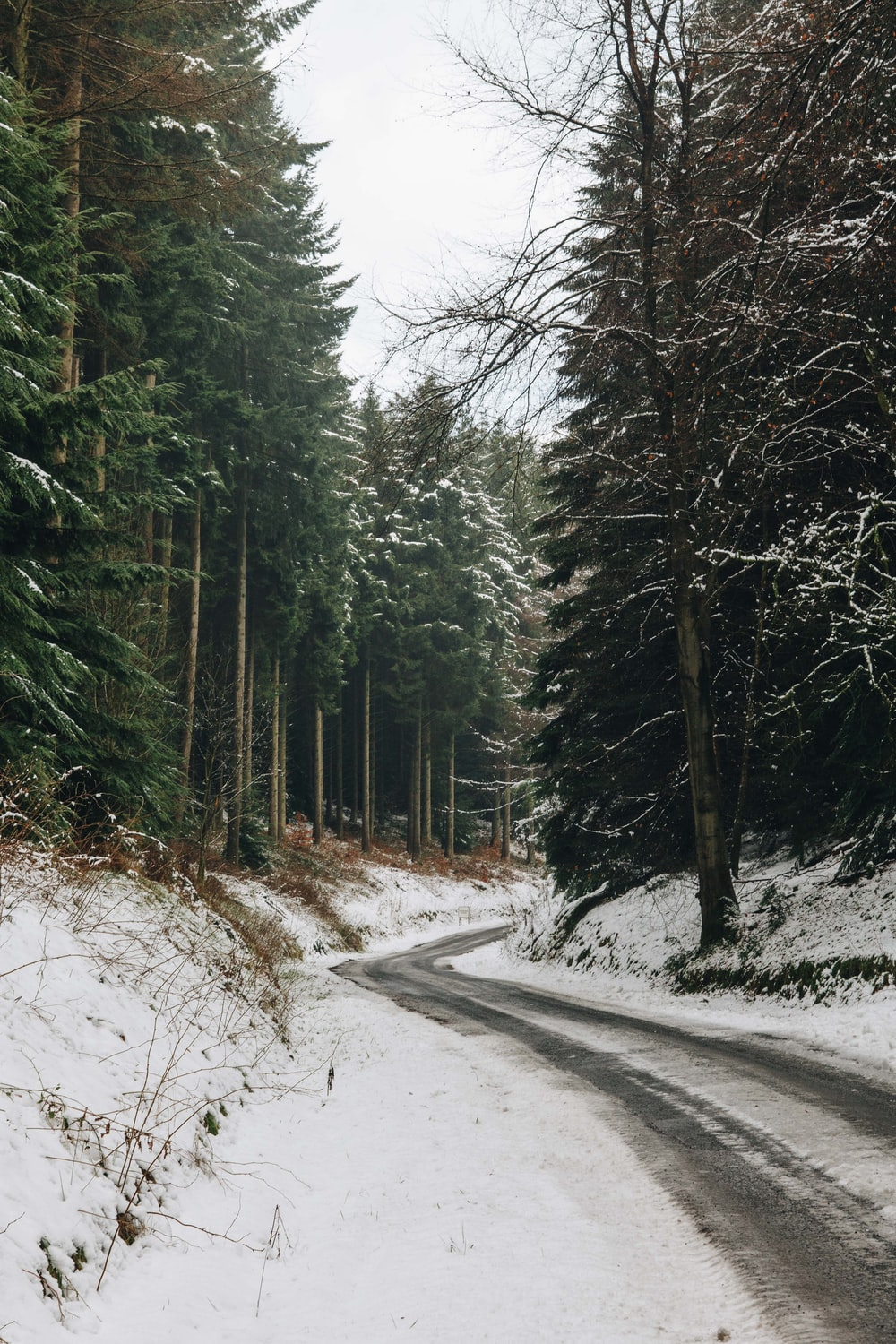 gray road at middle of forest covered with snow