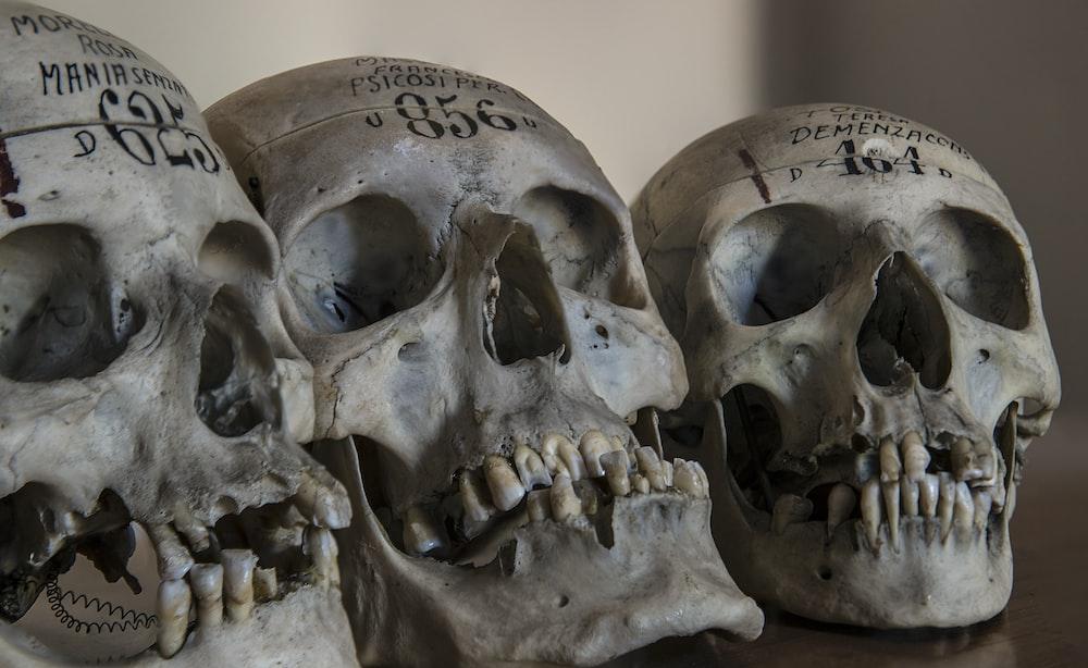 three gray skull decors
