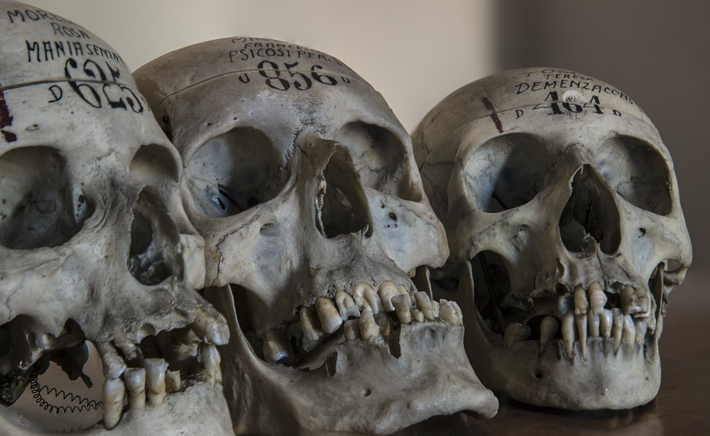 three gray skull decors