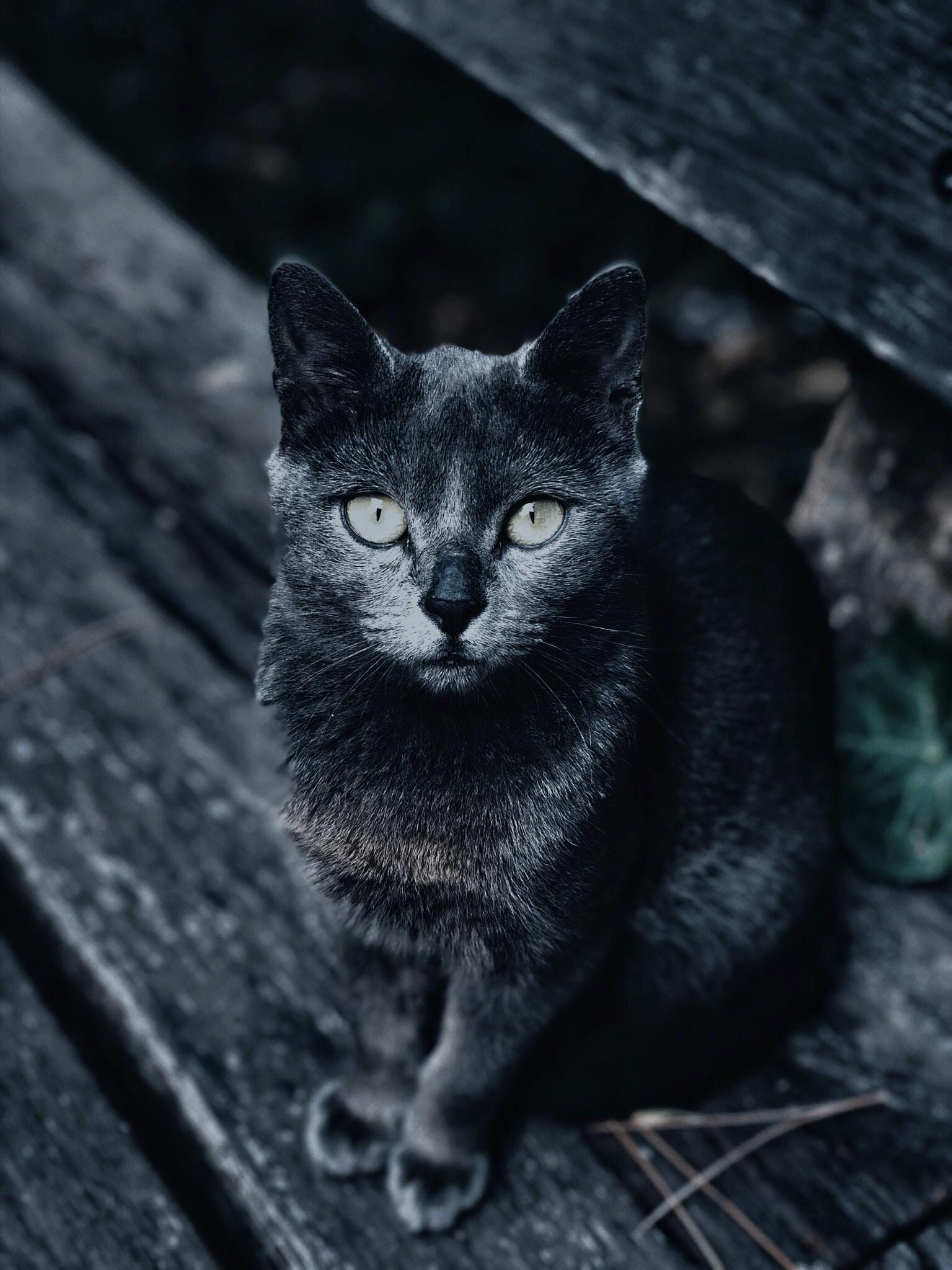 Stray Cat animal stories