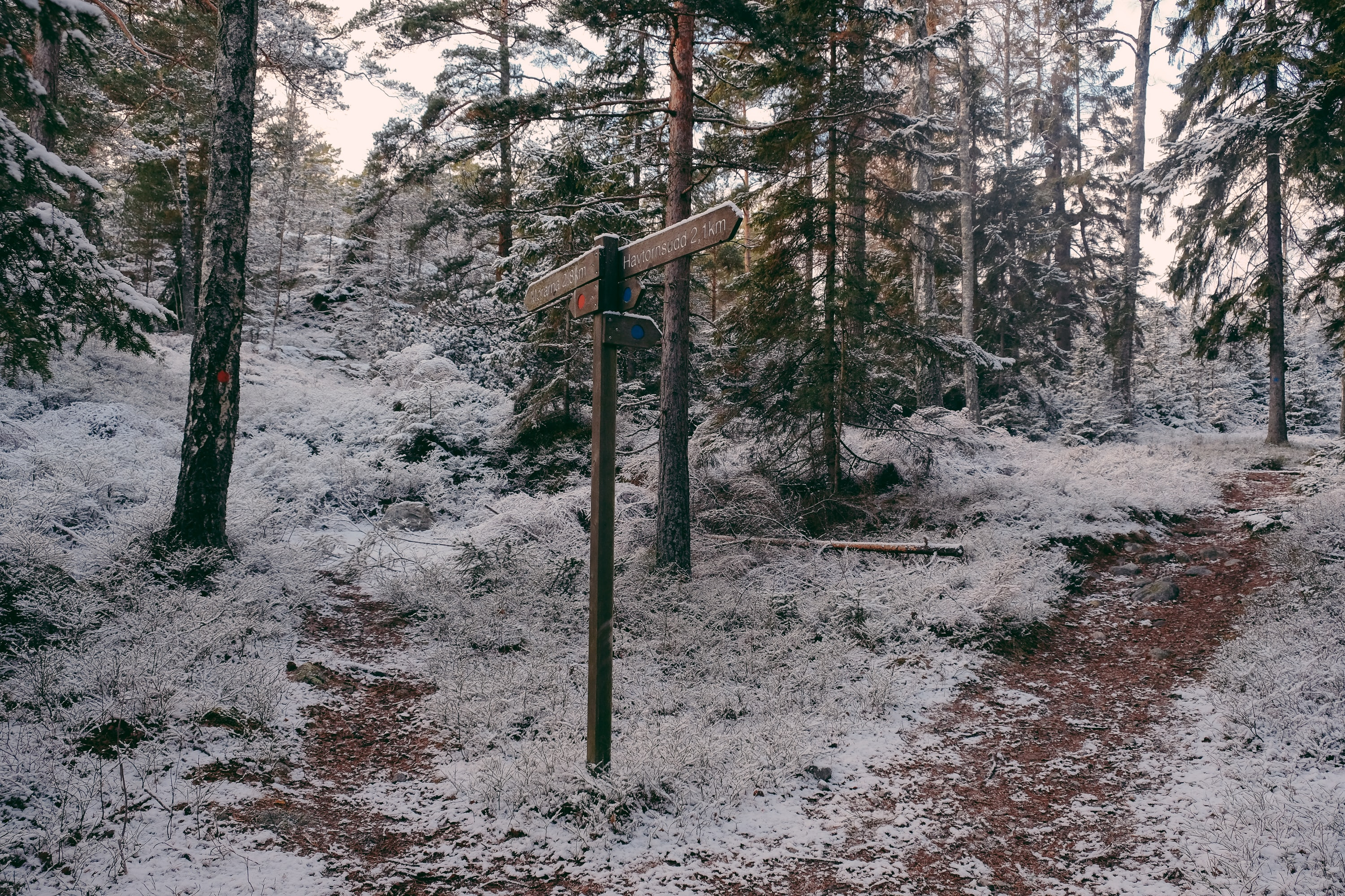 landscape of treest covered with snow