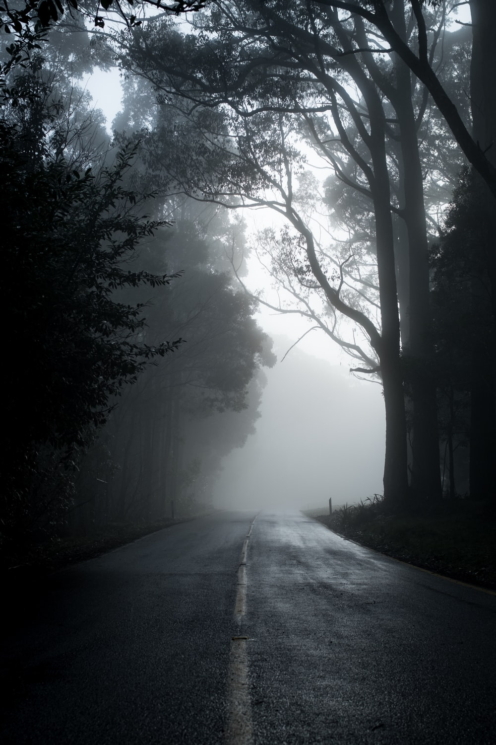 gray road in between trees in grayscale photography