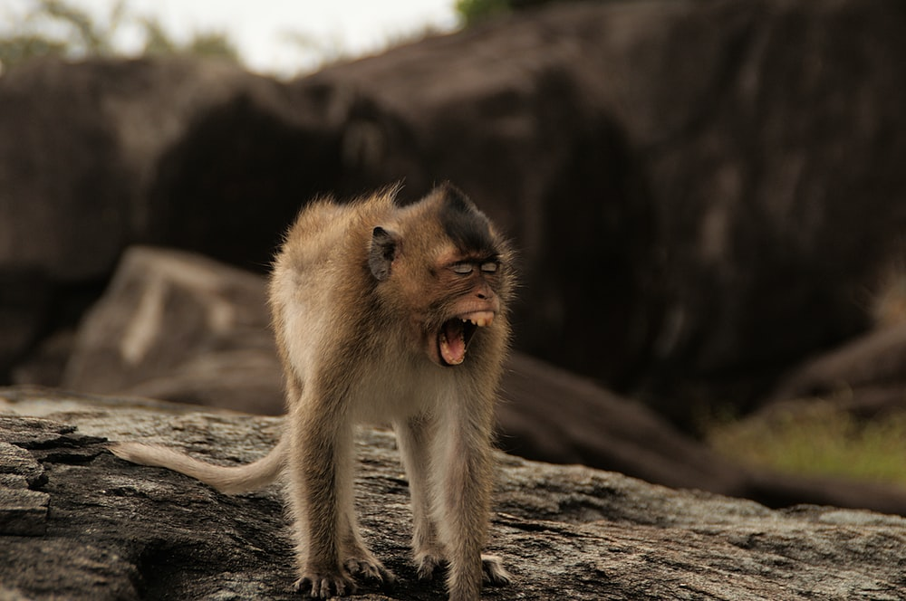 brown baboon on drift wood