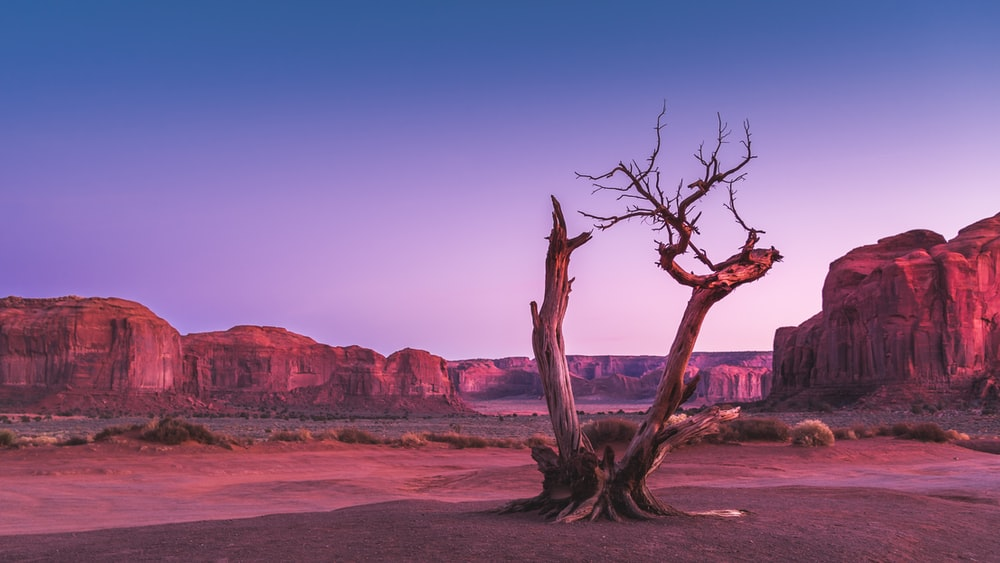 withered tree in middle of field with mountain in background