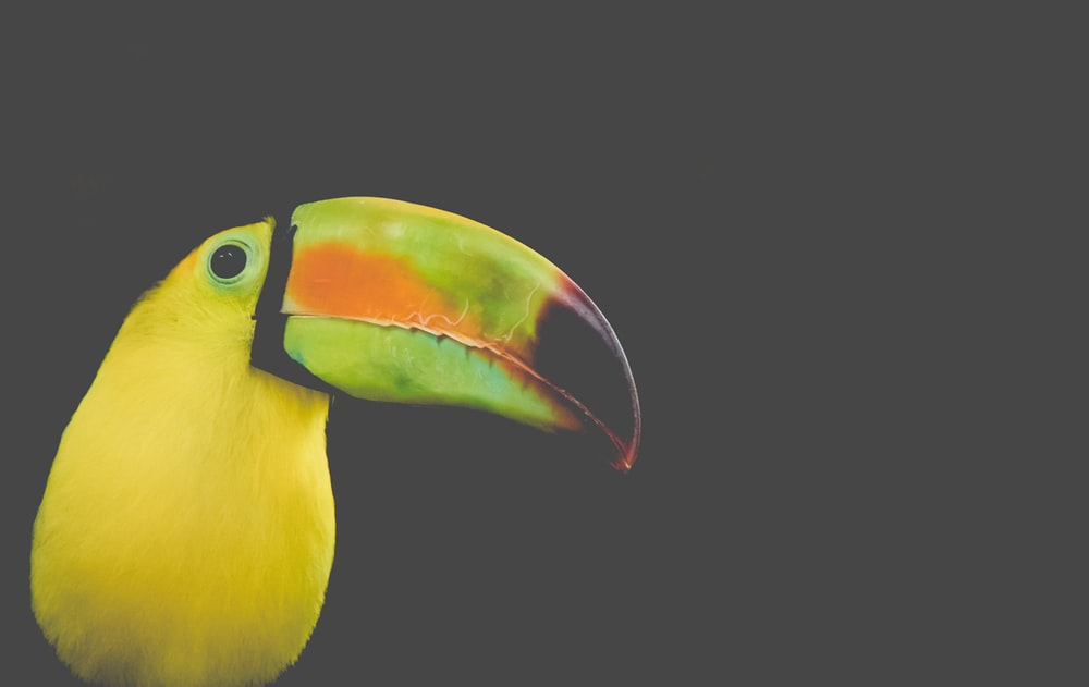shallow focus photo toucan