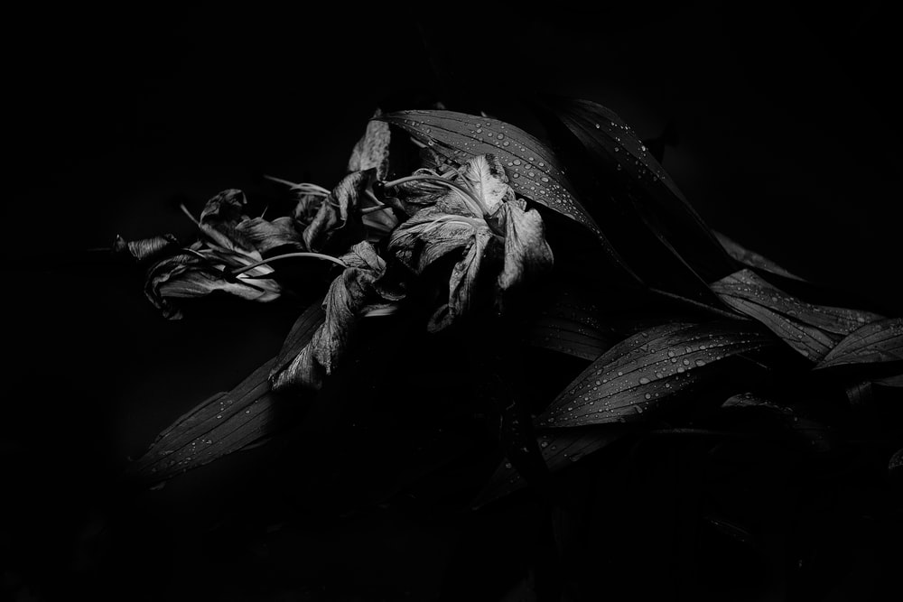 grayscale photo of flower