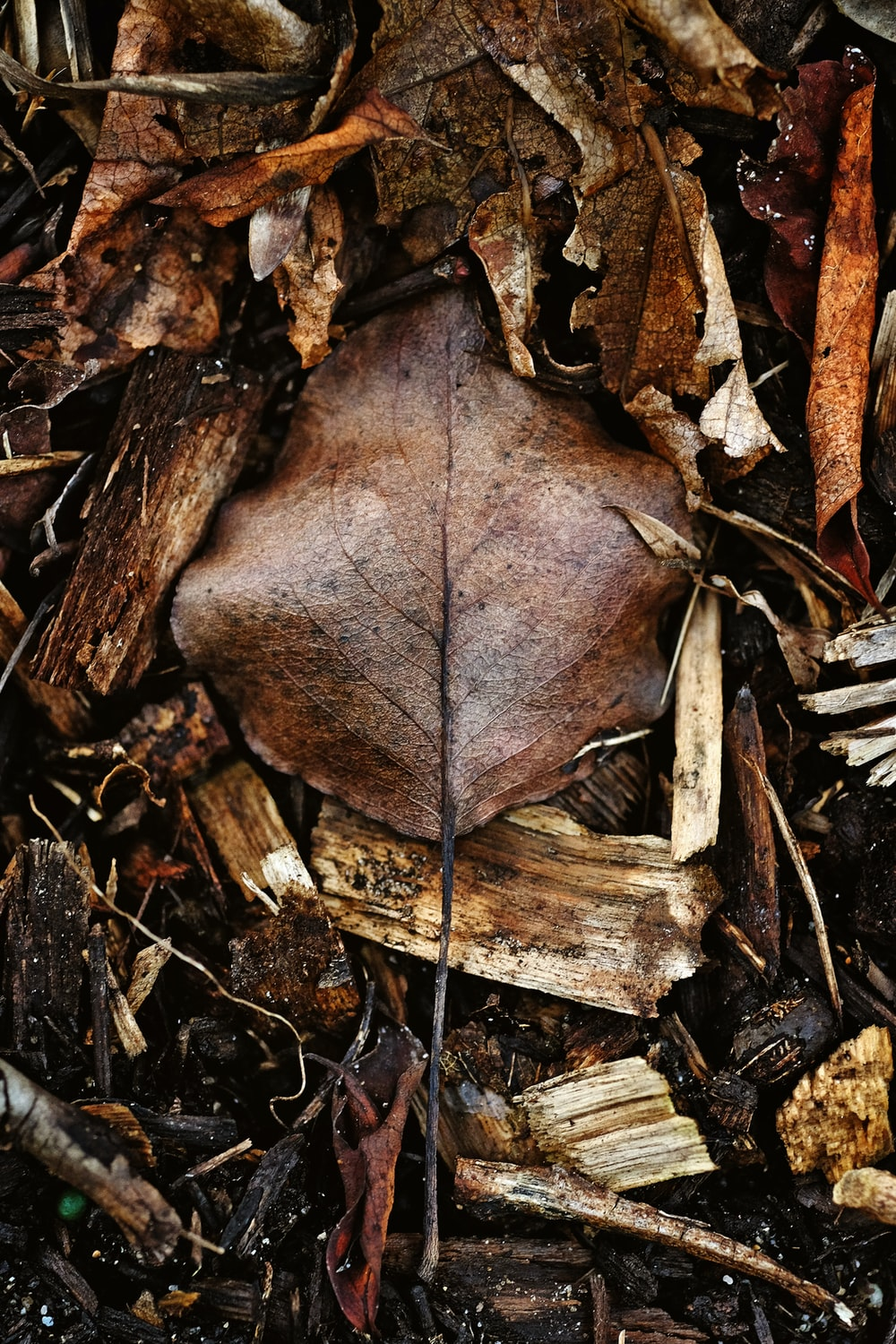 flat-lay photo of dried leaves and firewood