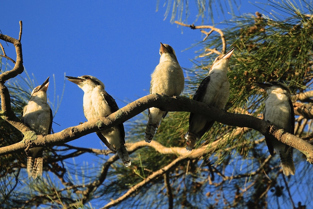 five white birds on brown tree branch