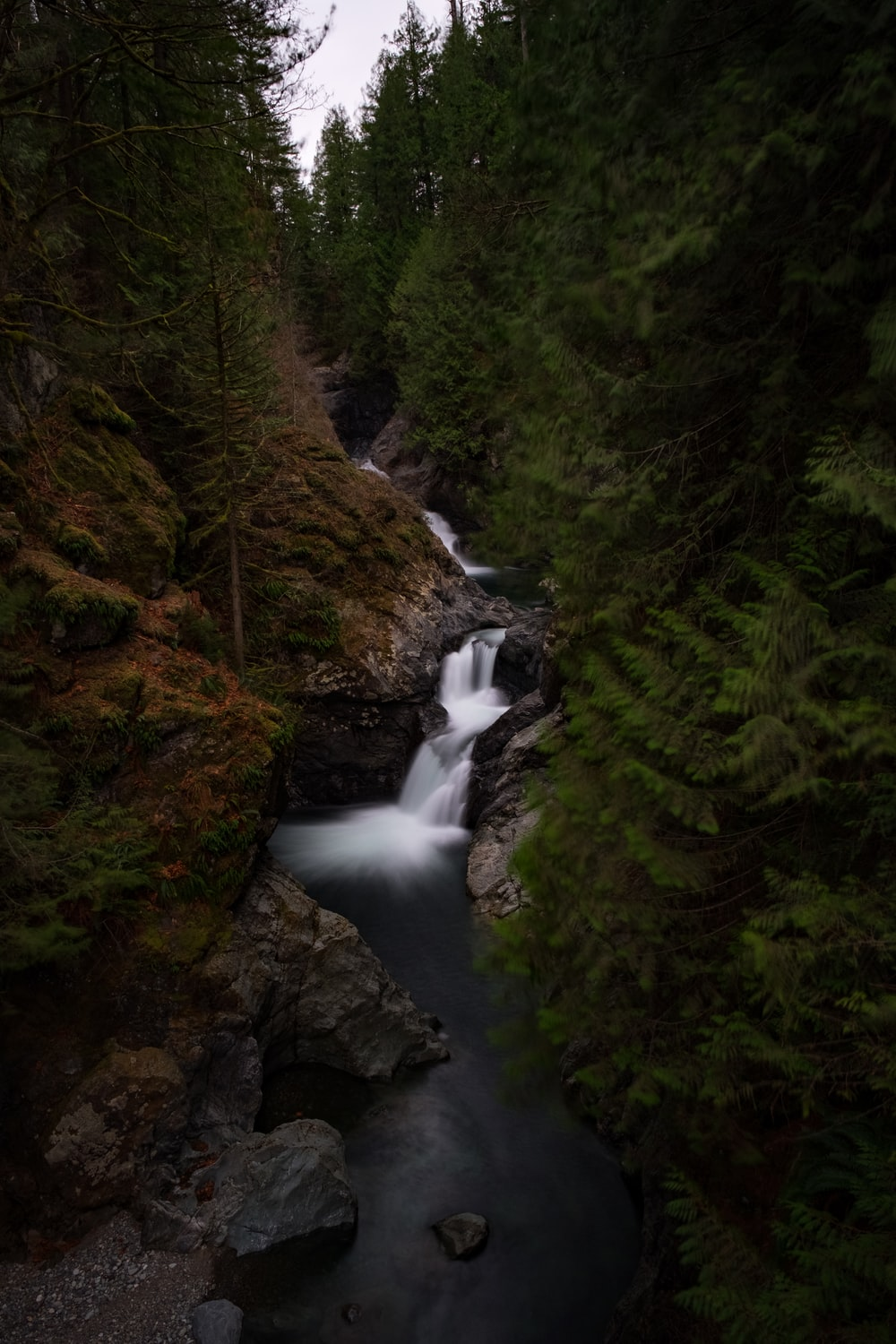 waterfalls and forest during day