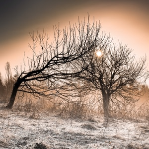 Our roots for us alone,our branches leaning together.Stretching out to the sun,withstanding cold weather.