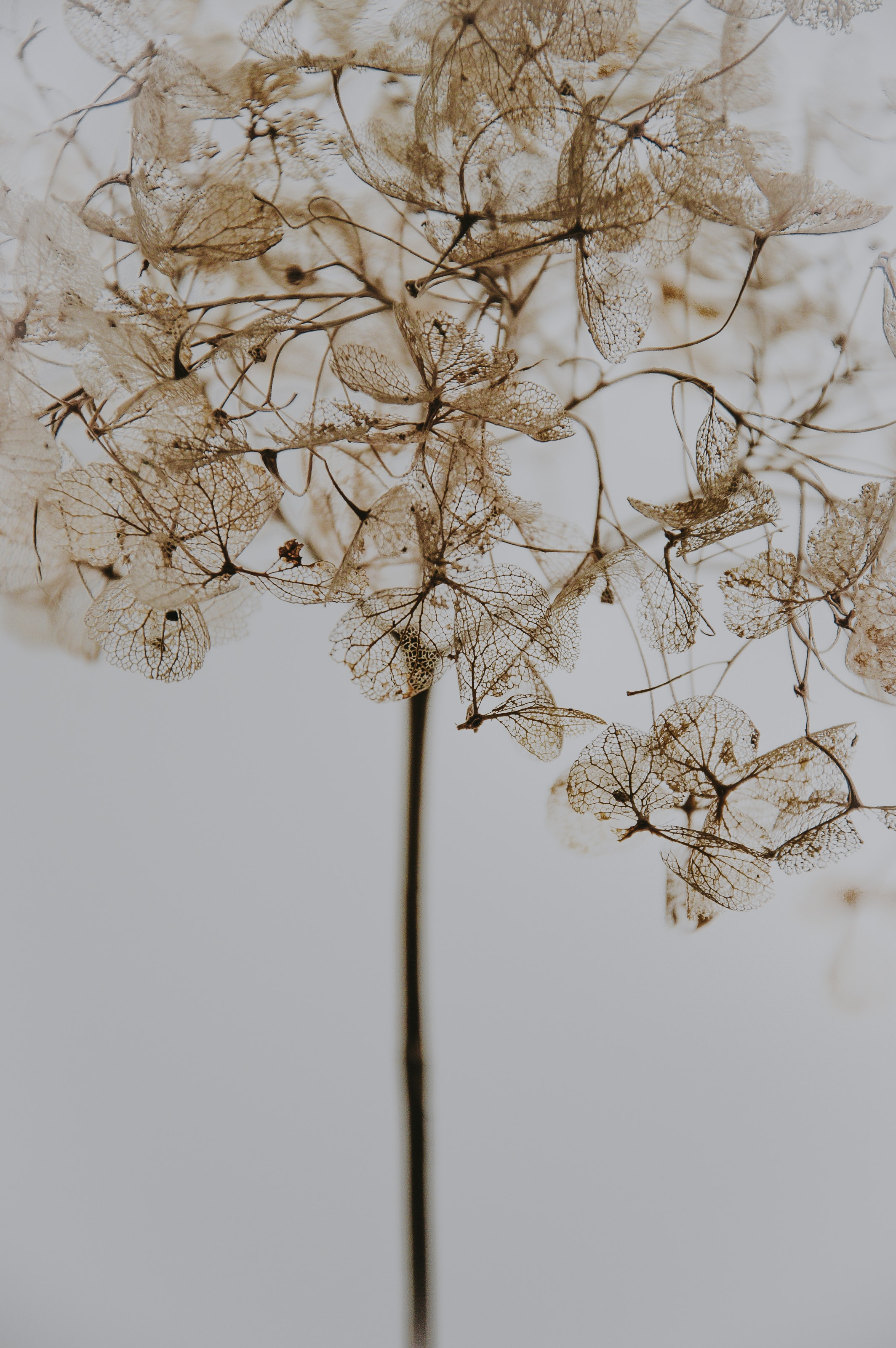 brown dried petaled flower