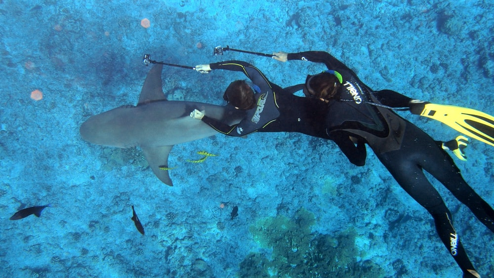 two divers taking photo of shark