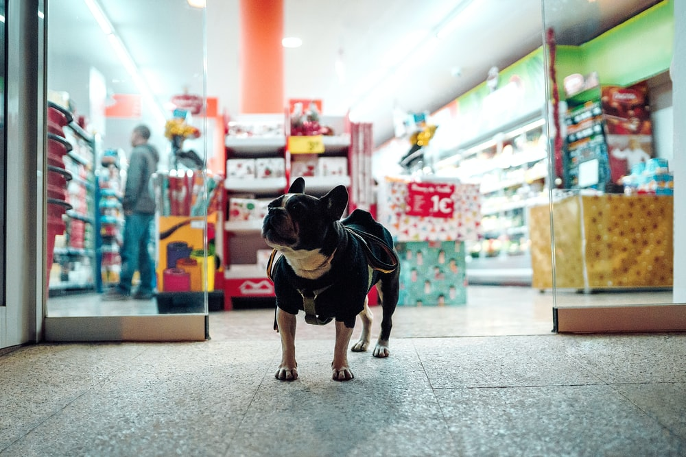 black dog walking in front of store