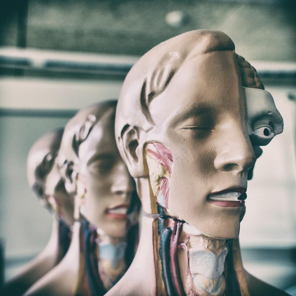 human anatomy figures