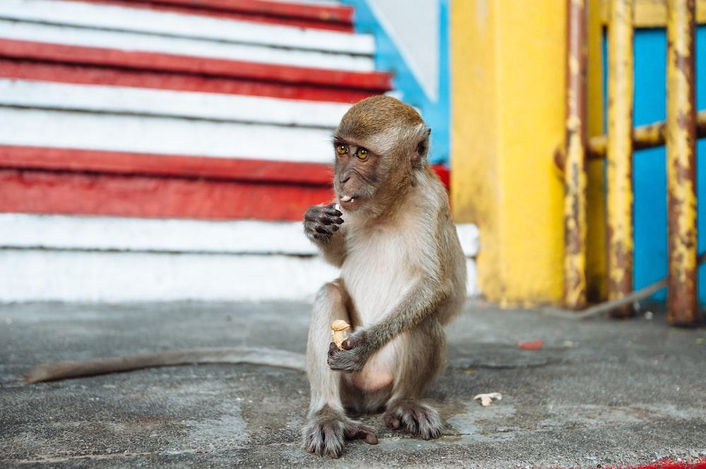 brown monkey sitting on floor