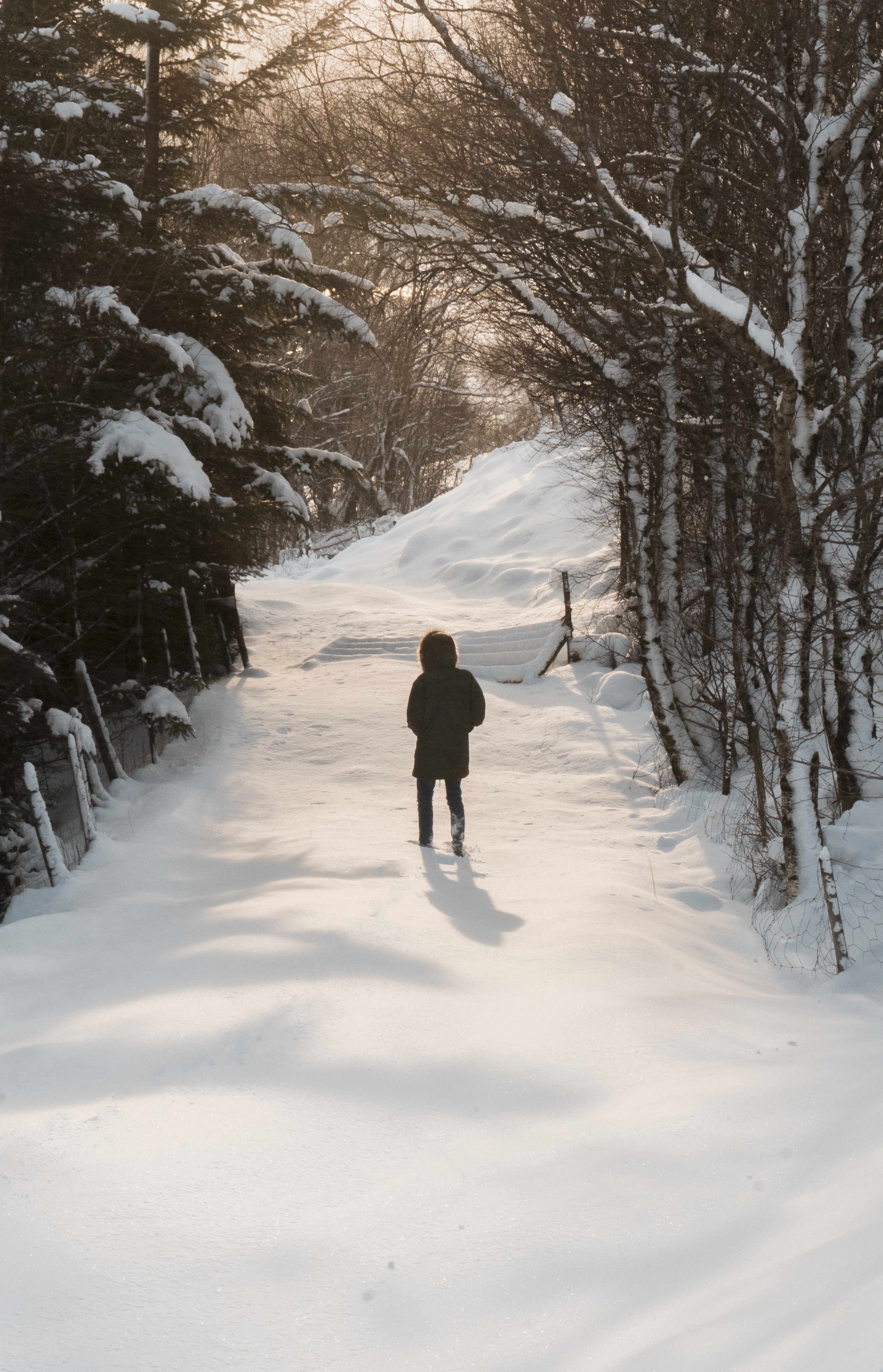 person waling on snow field surrounded by trees