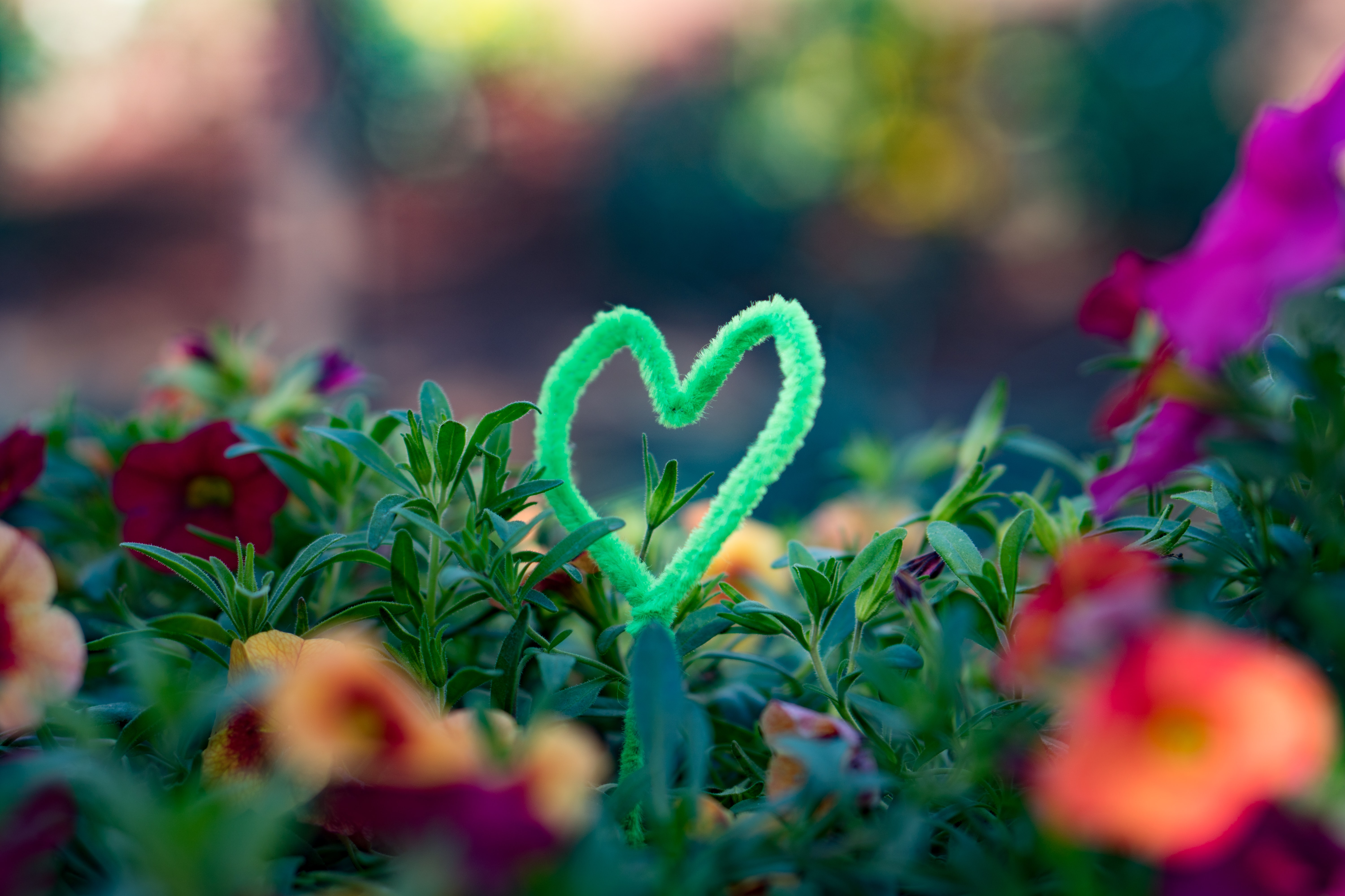 selective focus photography of heart-shaped green wire