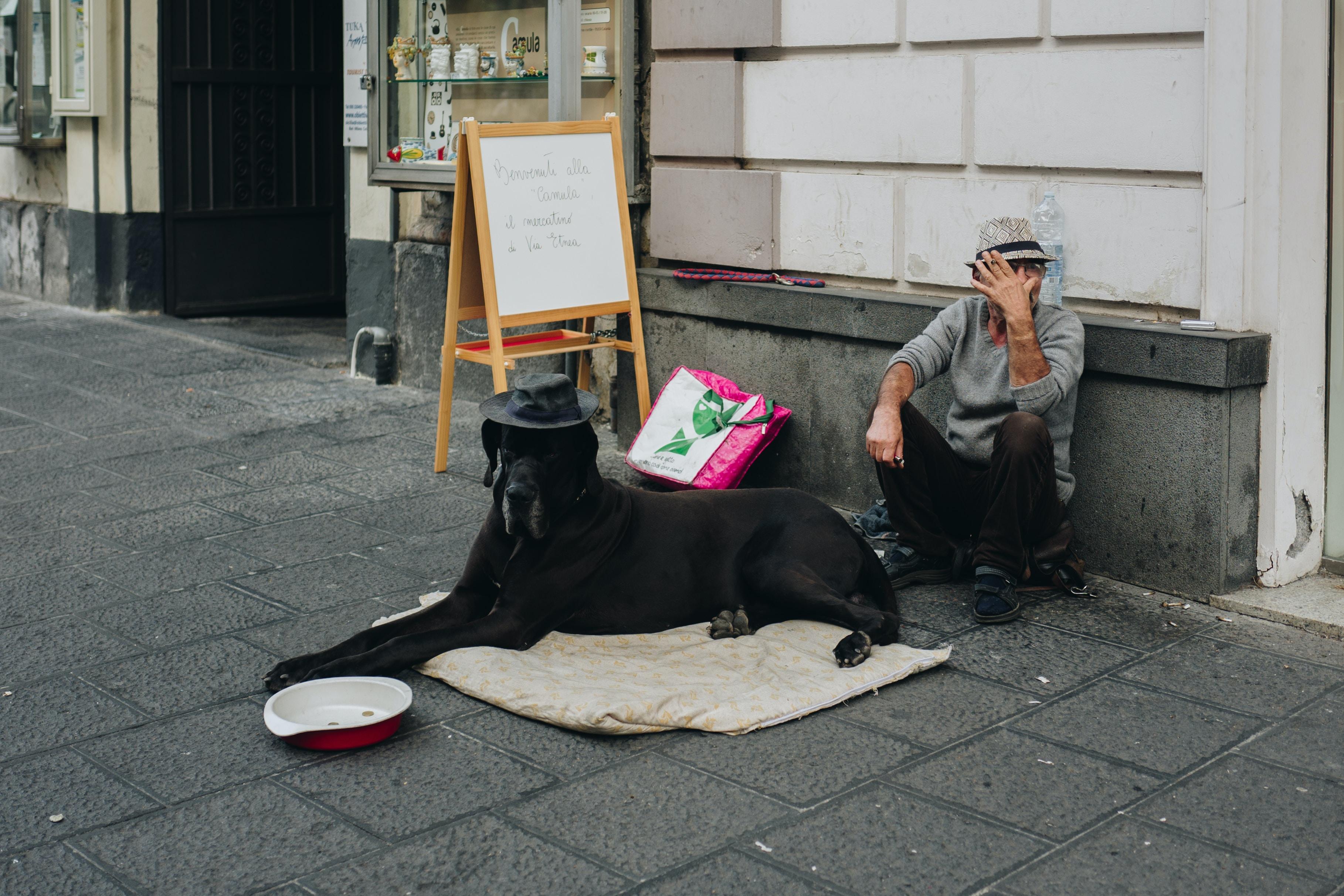 man sitting beside the dog
