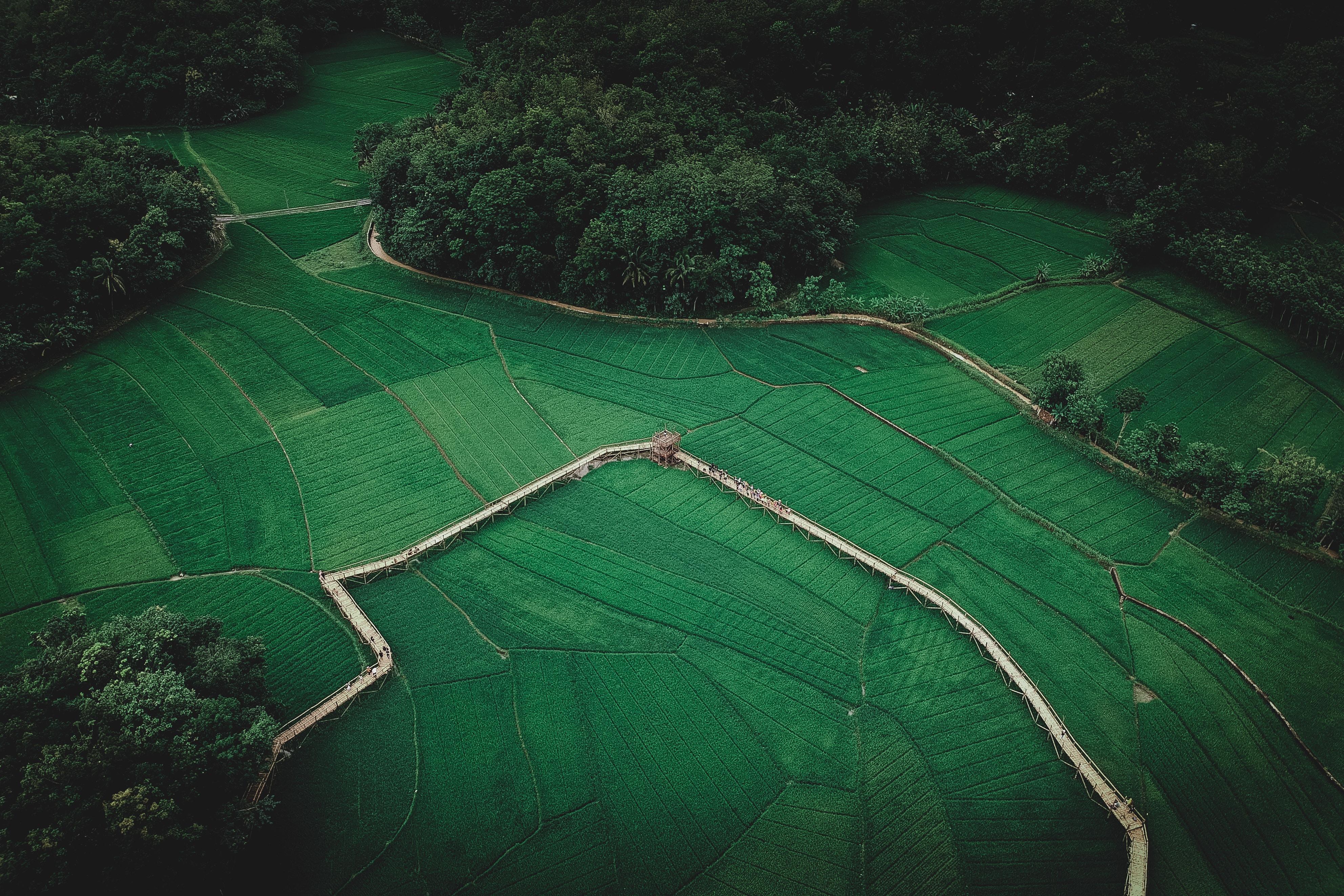 birds eye view of field