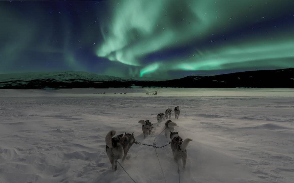 scenery of aurora