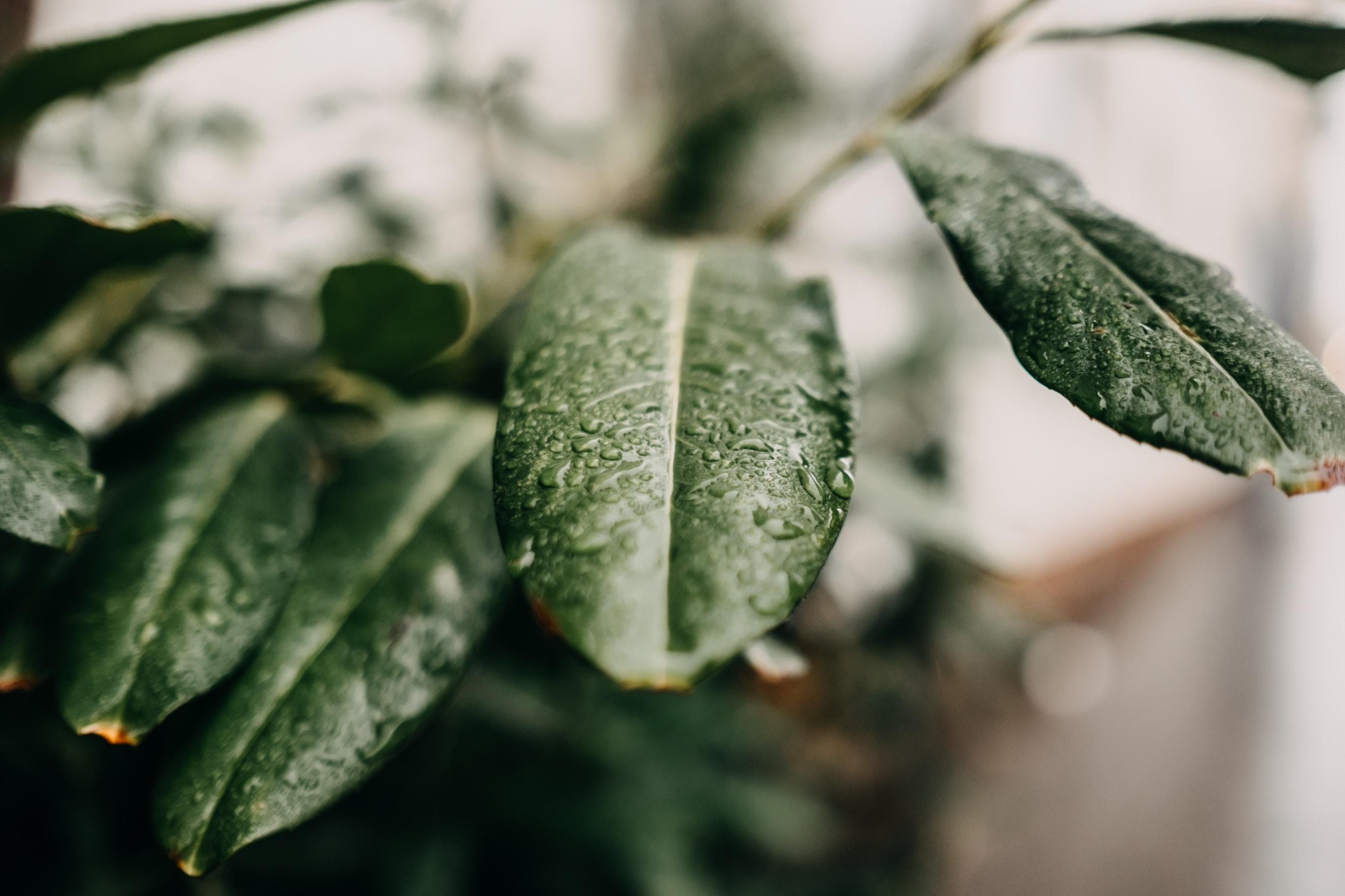 macro shot of plant