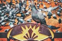flock of pigeons at daytime