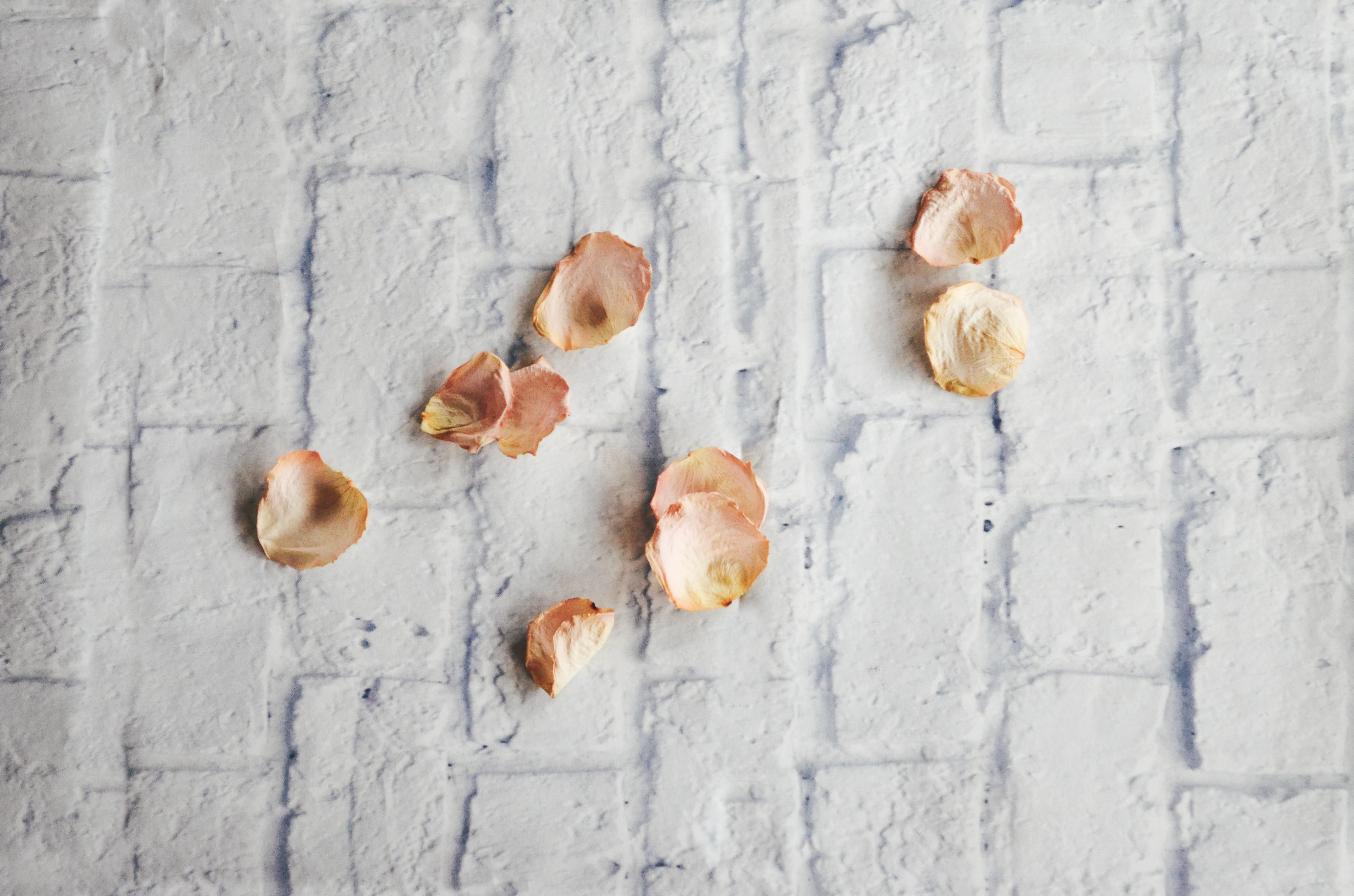 nine withered rose petals on white surface