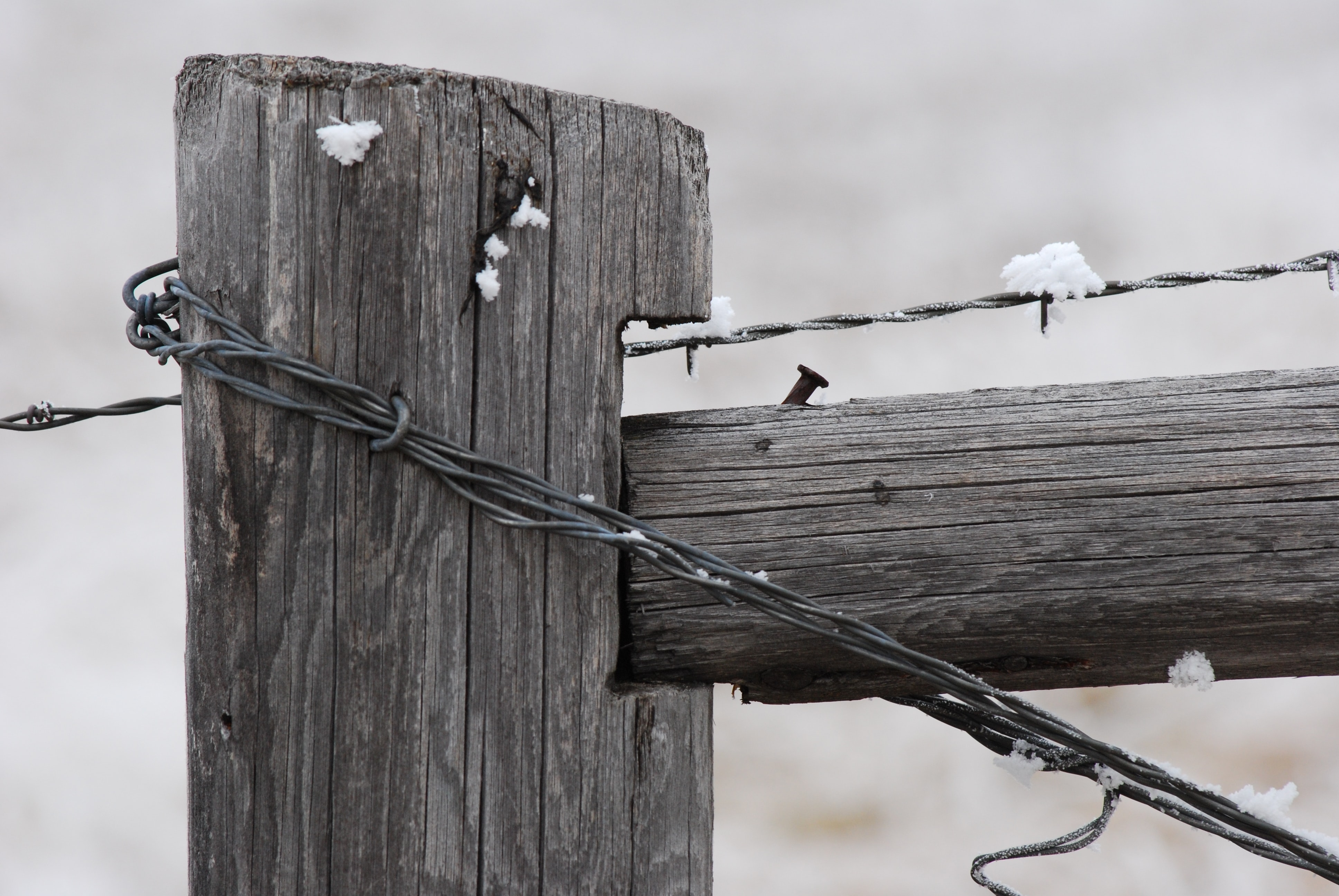 grayscale photo of wooden post with barbed wires