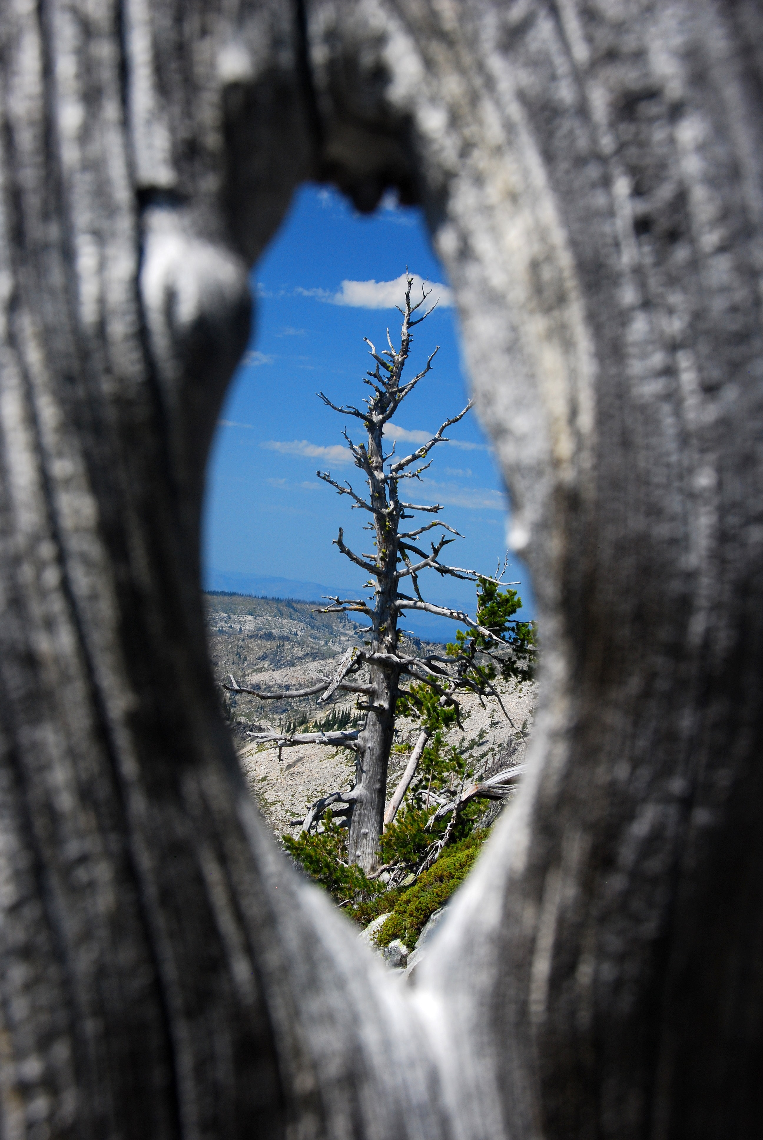 selective focus photography of dead tree