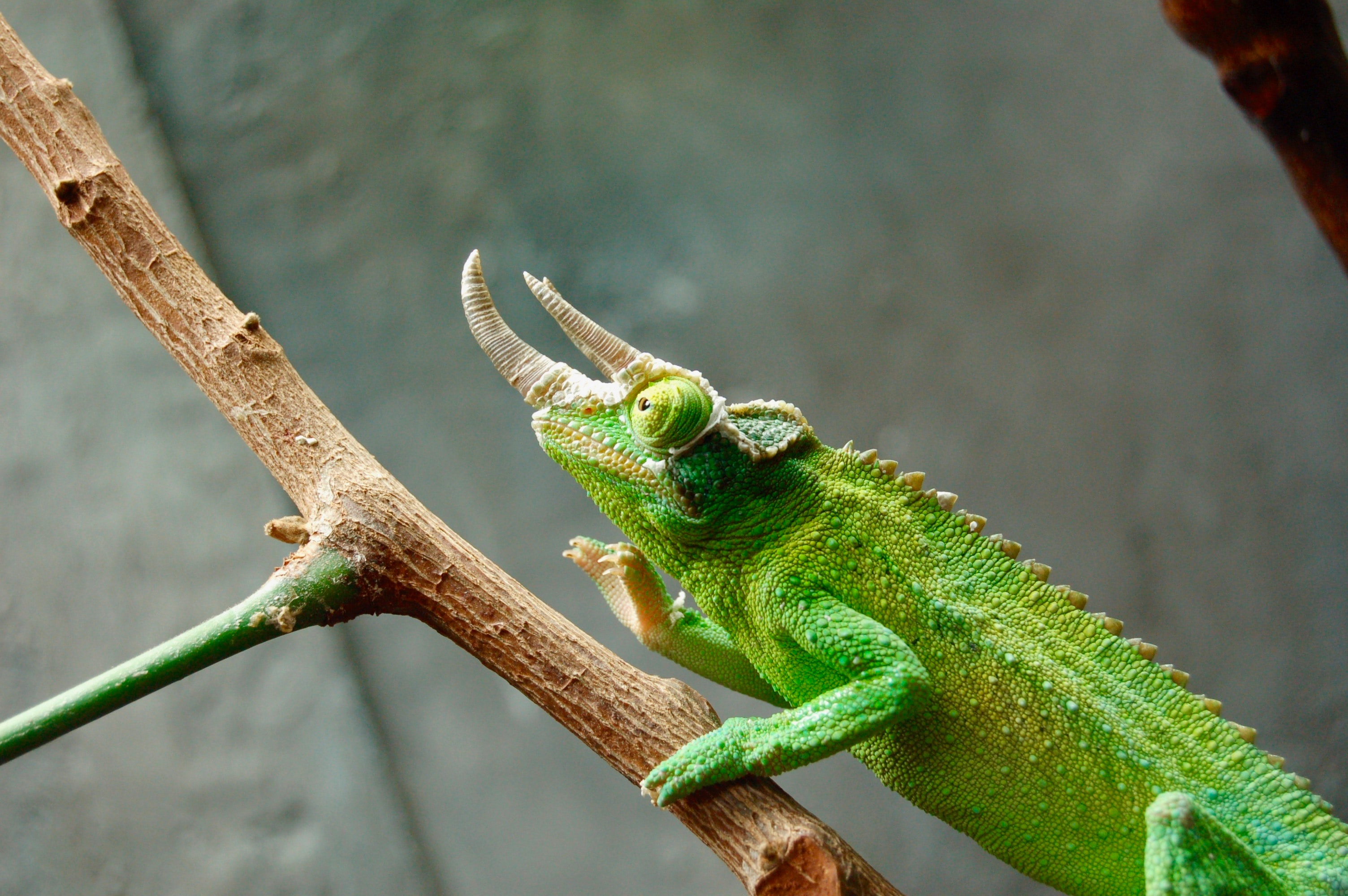 shallow focus photo of green reptile