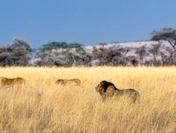 Karatu - Serengeti