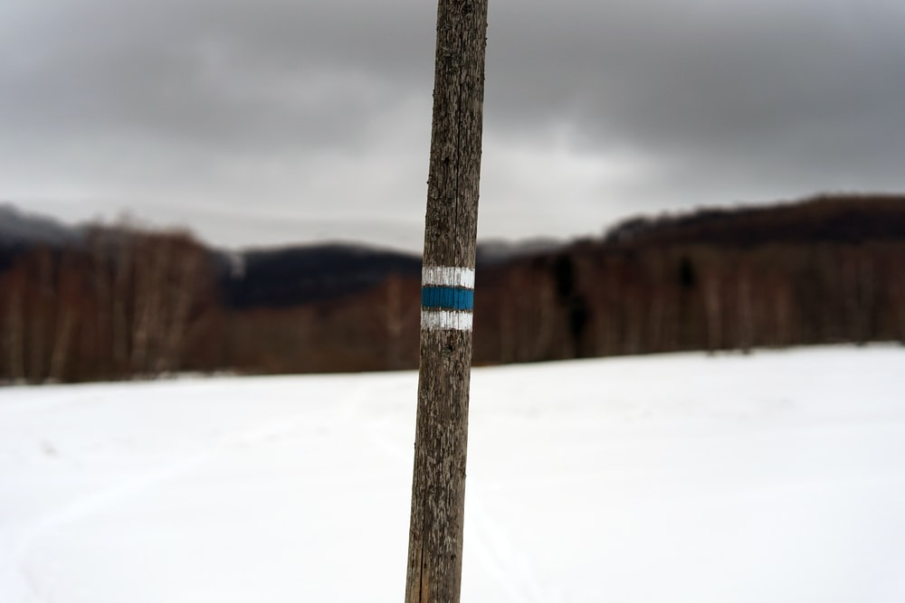 focused photo of a brown and white stick