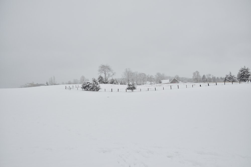 snow covered ground and trees